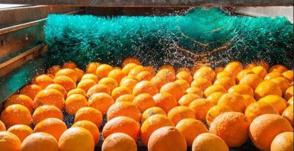 Regeneración de aguas residuales de lavado de cítricos