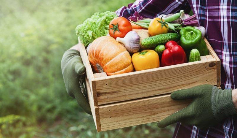 Crean una película que ayuda a detectar pesticidas y químicos en la piel de frutas y verduras