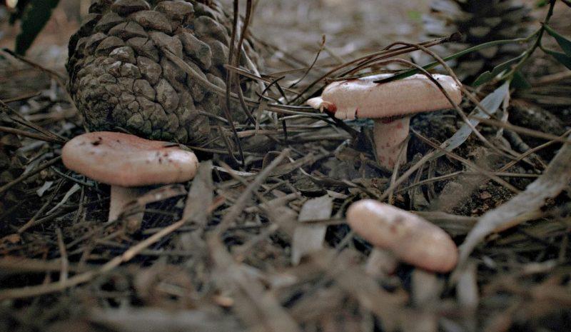 Hermès revoluciona la sostenibilidad en la alta costura utilizando cuero procedente de hongos