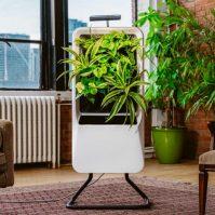 respira-purificador-aire-portatil-funciona-plantas-2265665